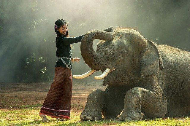 La imagen de un elefante como símbolo de la memoria y por tanto de laas bases de datos aadémicas. Una niña juega con un elefante.